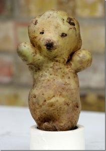 kentang teddy bear